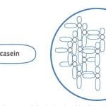 The importance of casein mineralization in infant formula 1
