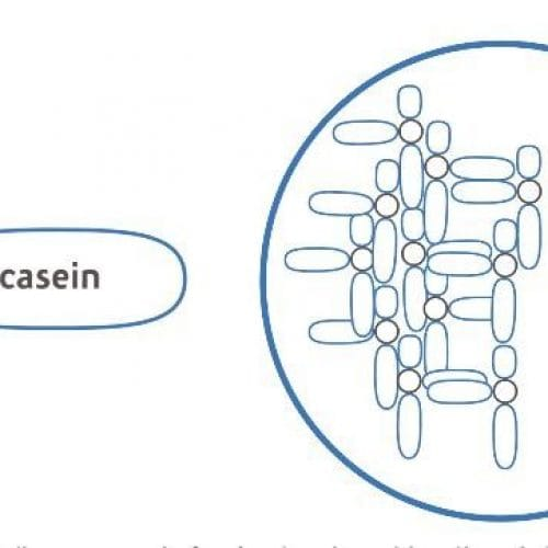 The importance of casein mineralization in infant formula