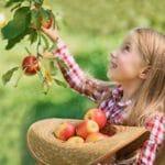 Webinar: Sustainable Diets