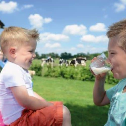 Recommandation pour le lait et les produits laitiers