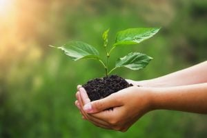 Rapport de la FAO et de l'OMS sur les principes directeurs pour une alimentation saine et durable