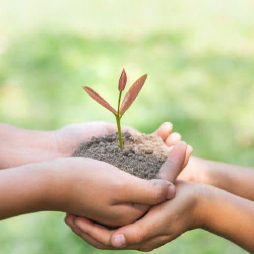 E-learning terbaru tentang perkembangan anak dan pola makan berkelanjutan
